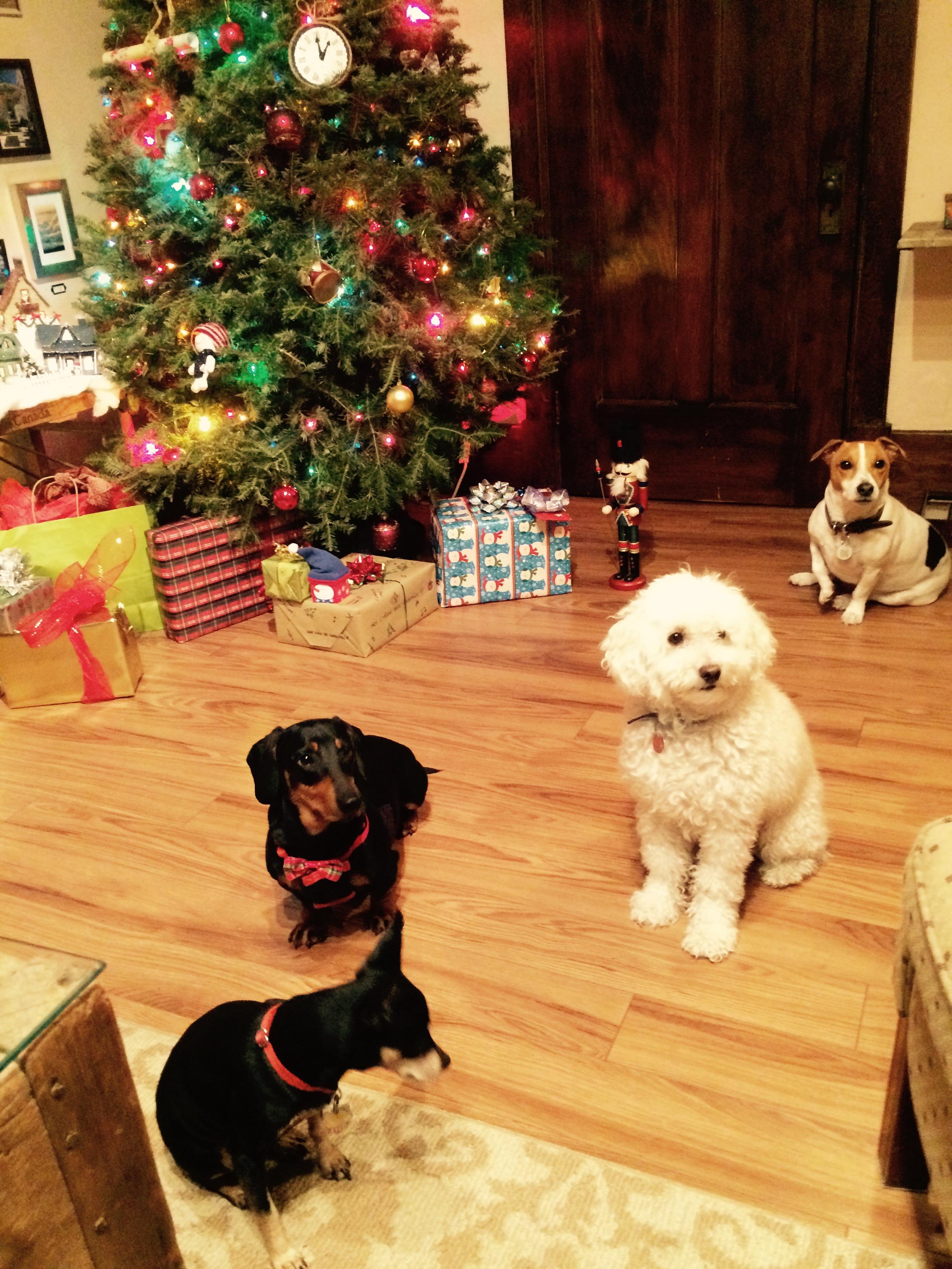 Vacances de no l 2016 2017 garderie pour petits chiens - Rentree vacances noel 2016 ...